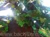 bachillere_ferialibro2011_11