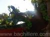 bachillere_ferialibro2011_12