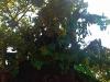 bachillere_ferialibro2011_17