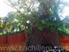 bachillere_ferialibro2011_18