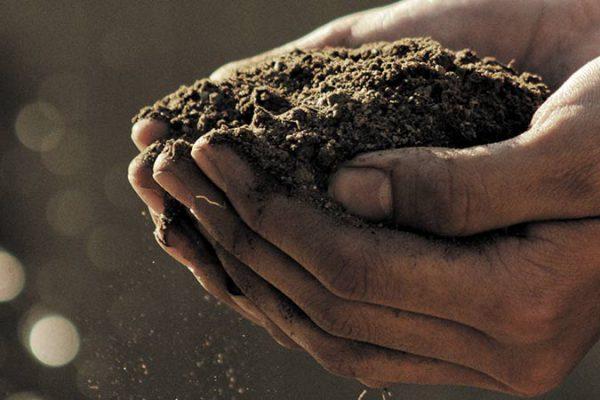 Becas Agricultura